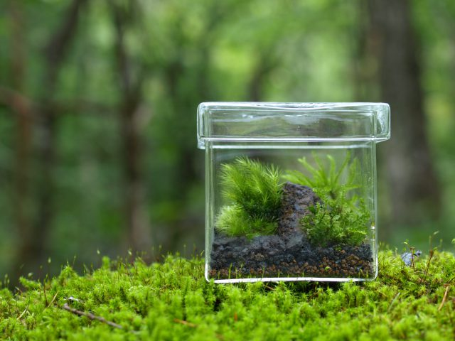 景色を作る苔テラリウム