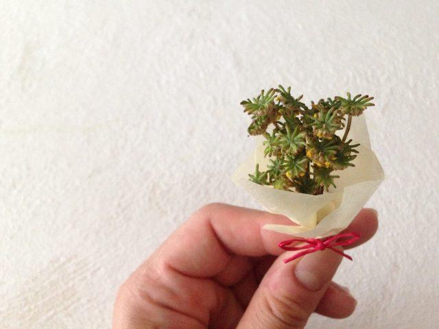コケの花束