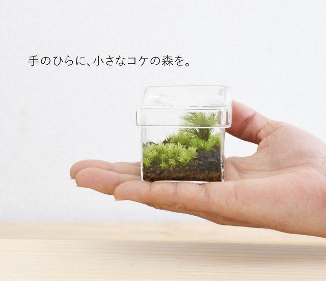 苔テラリウム苔景BOX