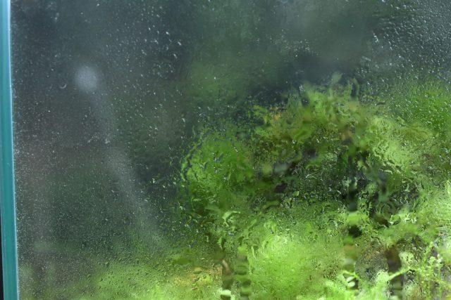 濡れた水滴