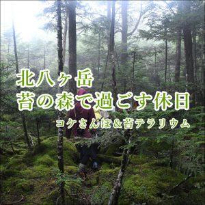 北八ヶ岳苔の森
