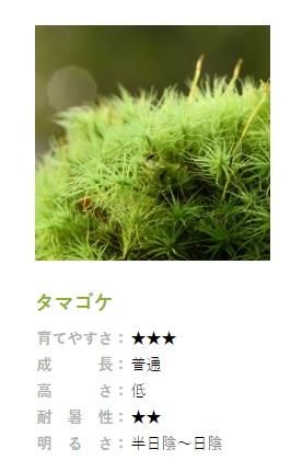 コケ図鑑タマゴケ