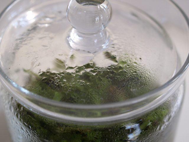 水滴がついた苔テラリウム