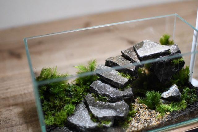 石段テラリウム