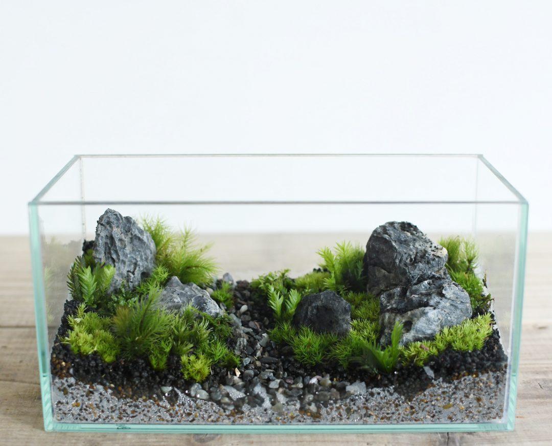 景色をデザインする苔テラリウム
