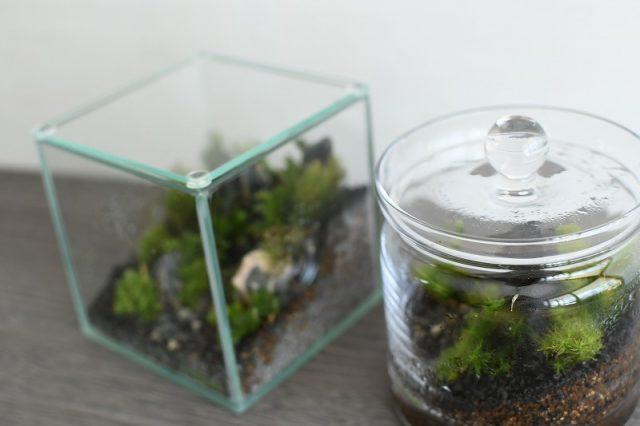 苔テラリウムガラス容器