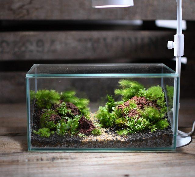 ミニ水槽の苔テラリウム