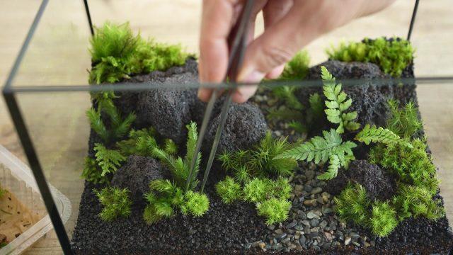 他の種類のコケを植える
